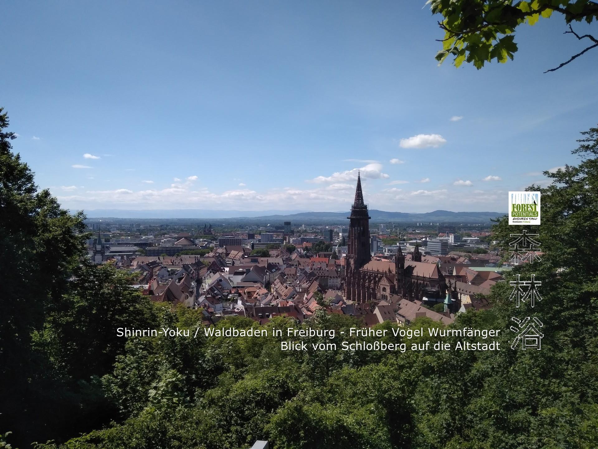 Shinrin Yoku - Waldbaden Freiburg - morgens - Schlossberg