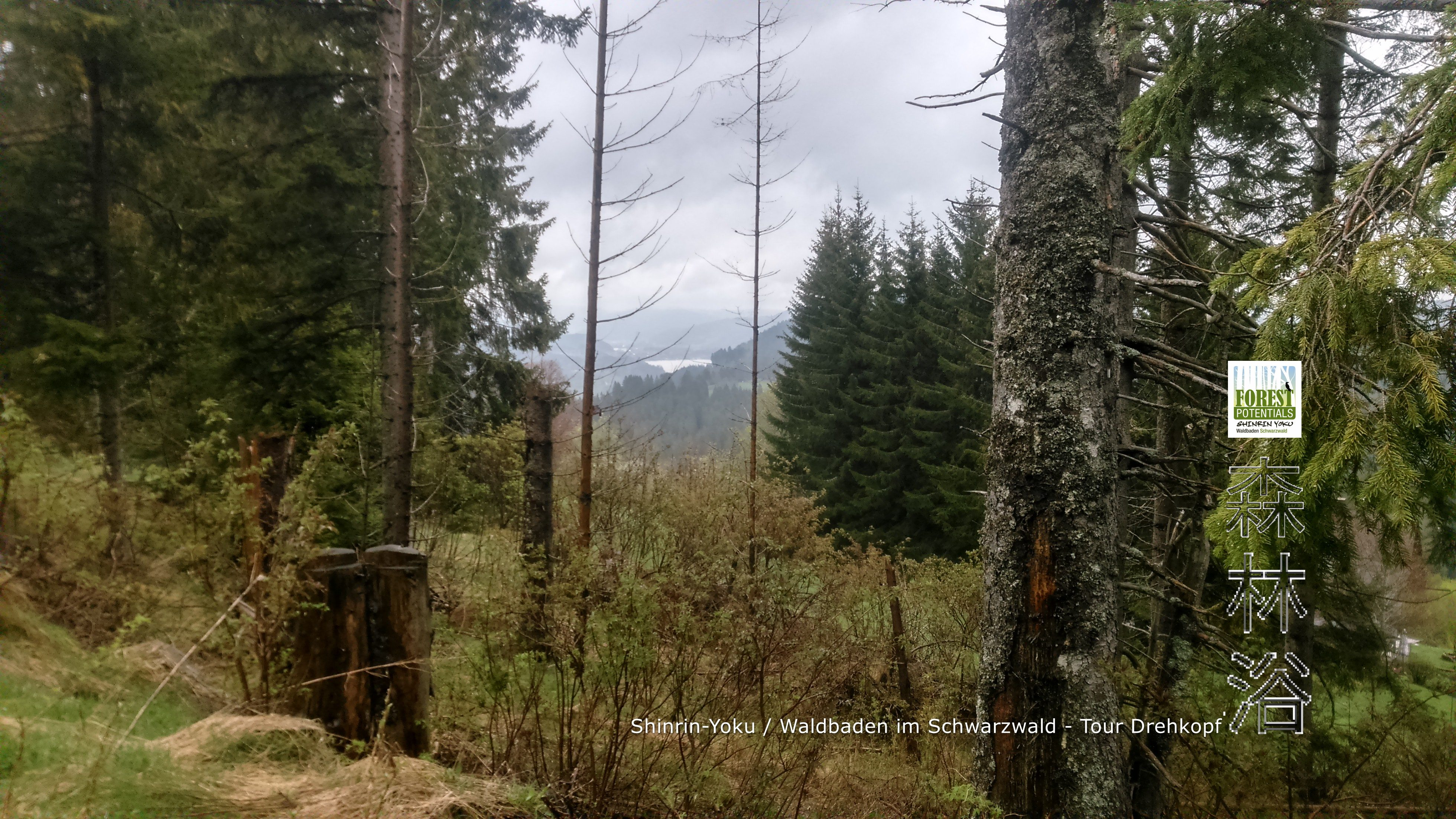 Shinrin-Yoku Waldbaden im Schwarzwald